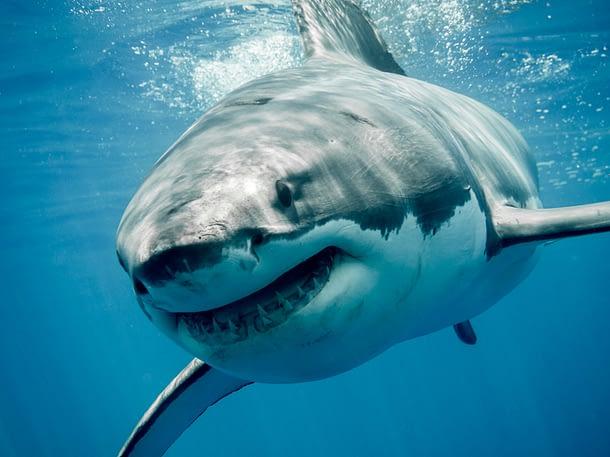 Online Dating Shark